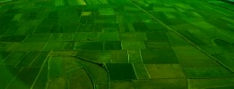 Rice fields from above